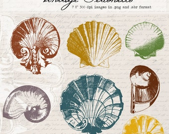 Vintage Seashells Digital Clipart and Photoshop Brushes: Commercial and Personal Use