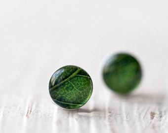 Green stud earrings, Green leaf stud earrings, Plant stud earrings, Green leaf earrings, Tiny stud earrings, Green earrings stud gift
