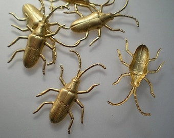 6 medium longhorn beetles