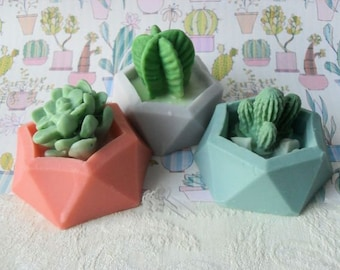 Cactus Minis with Aloe Soap  Set of Three