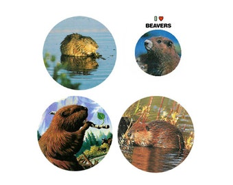 Beaver Magnets:  4 Bodacious Beavers for your home, your collection,  or to give as a unique gift