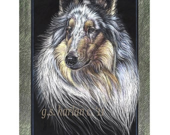 Rough Collie Dog Fine Art Note Cards - Free Shipping ***