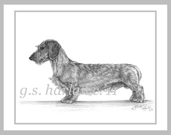 Wirehair Dachshund Dog Fine Art Note Cards - Set of Eight - Free Shipping ***