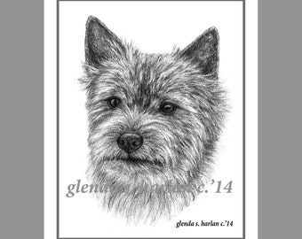 Norwich Terrier Dog Fine Art Note Cards - set of Eight - Free Shipping ***