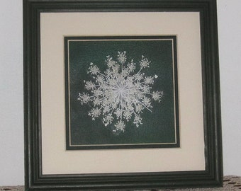 Exquisite Queen Annes Lace flower double matted  in 10x10 wood frame
