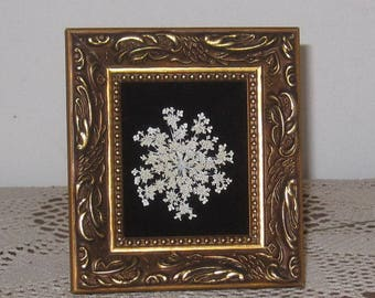 Small Queen Annes Lace on black velvet in antique-tone gold frame.