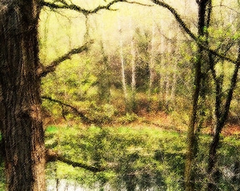 Pond in the Woods Photo Art