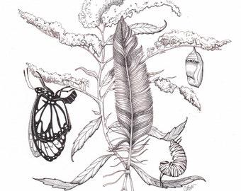 Original Monarch Ink Drawing
