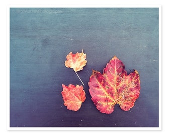 Nature Photography, Autumn Leaves Photograph, Fall Decor, Orange Brown Red, Autumn Wall Art, Farmhouse Country Chic Decor, Natural Rustic