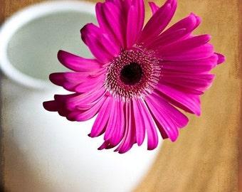 Pink Gerbera Daisy - 8x8 Fine Art Print