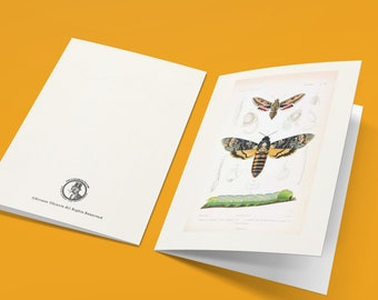 Deaths Head Moth Pack Of 5 Folded Cards with Envelopes, Blank Naturalist Cards, Antique Sphinx Moth Cards