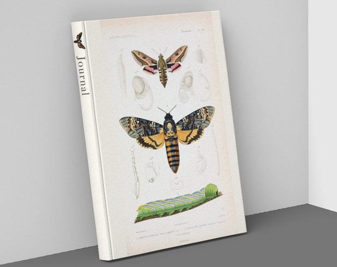 Featured listing image: Death's Head Moth and Butterflies Hardcover Journal, College Ruled Notebook, 80 pages