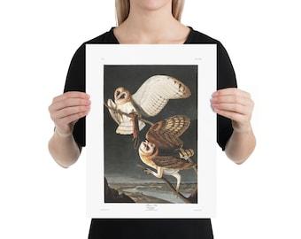 Audubon's Barn Owls Art Print, 12 x 16 inch Poster, Owl Wall Art Unframed