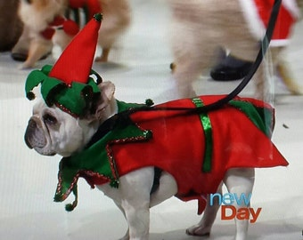 Santa's helper elf  As seen on Q13  Morning news, & New Day NW Christmas holidays costume dog costume costume contest winner hoilday warm