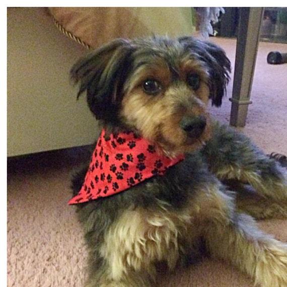 Paws on Black Slide on Collar Bandana Pet Accessory Paws Dog Bandana