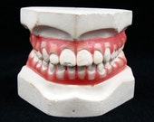 A Mouthful - Vintage Plaster Dental Mold with Realistic Pink Gums & White Teeth, Creepy Disembodied Grin, Great Halloween Decoration