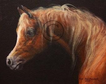 Arabian Horse print 11x14 inch or you choose a standard size
