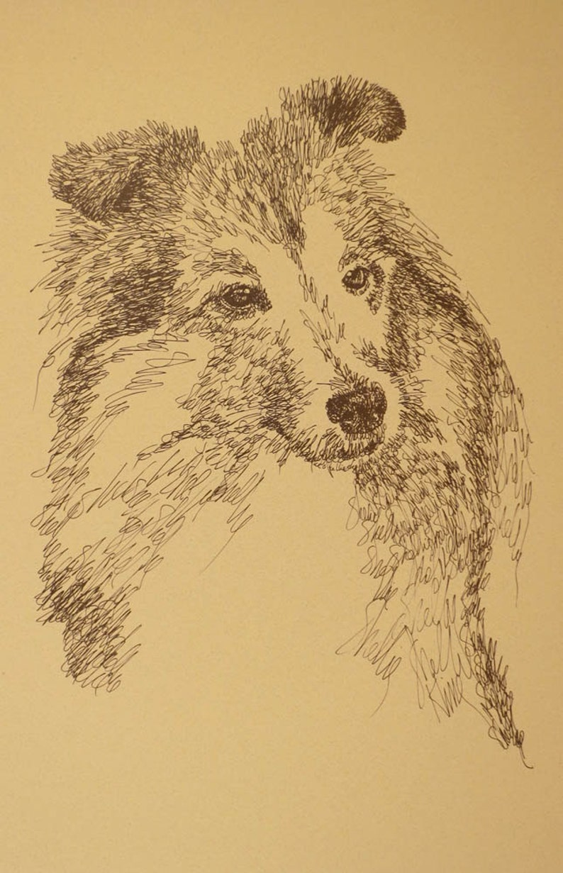 Shetland Sheepdog Sheltie dog art portrait drawing from words  Dog's name  added FREE  Great gift  Signed Kline 11X17 Lithograph 41/500