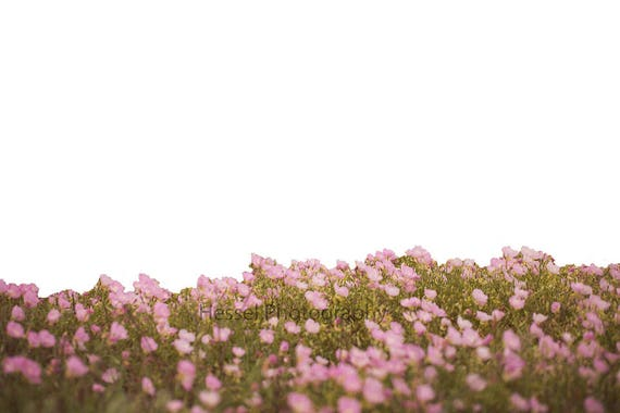 Flower Field Digital Background Spring Flower Field Digital Etsy