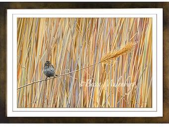 bird fine art Red-winged Blackbird wildlife nature print