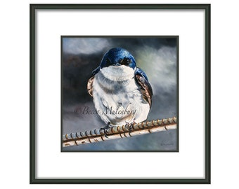 bird fine art Tree Swallow wildlife nature fine art print