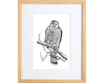 original bird drawing hawk