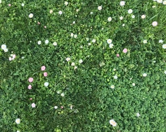 Flowering Lawn Seed - Eco Lawn, Water Wise Lawn, No Mow Lawn, Drought Tolerant Lawn, Grass Seed, Lawn Alternative