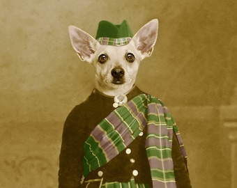Clan Chihuahua, large original funny photograph of a kilt wearing young anthropomorphic Chihuahua dog from Scotland
