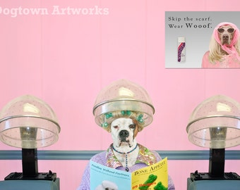 Beauty Shop, funny large original photograph of white Boxer dog wears vintage dress under hair dryer in pink beauty parlor shop. Ships free.