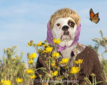 Monarch Watch, funny original large photograph of white Boxer dog wearing vintage dress and watching a monarch butterfly in sunflower field