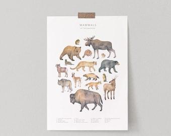 Animals of Yellowstone watercolour print