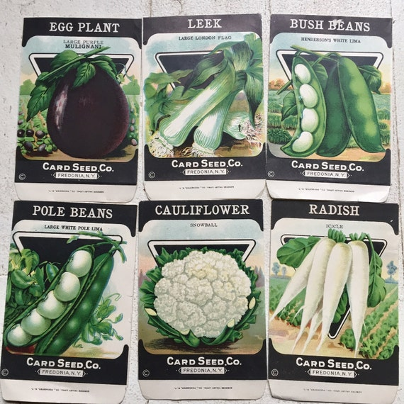 Seed Card Co.set of 6 packets, unused no seeds.