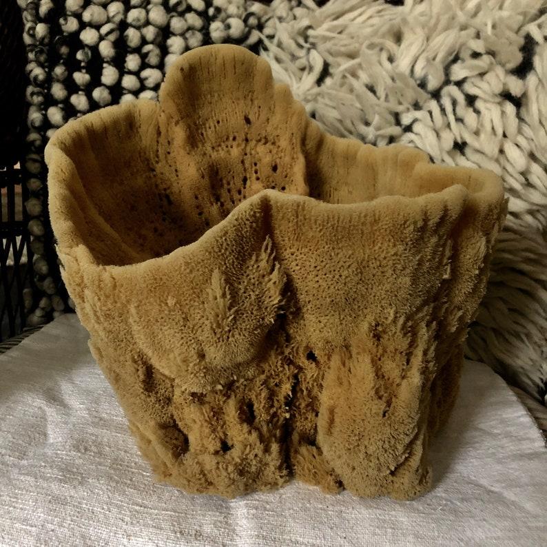 Vintage Natural Sponge image 0