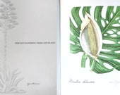 Vintage flower book | Mexican Flowering Trees And Plants | 1st Edition 1961 | floral bookplates | botanical | Helen O'Gorman | RARE