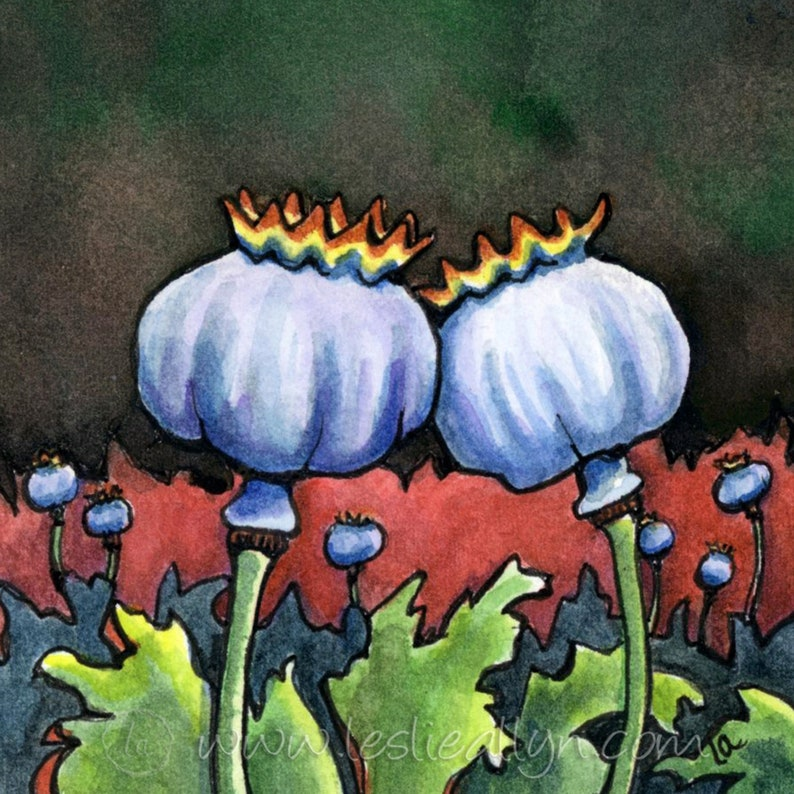 Poppy Pods  6x6  Original Watercolor image 0