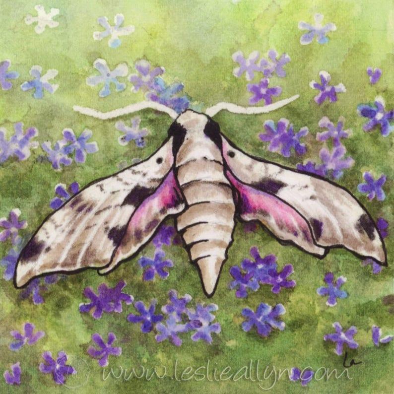 Sphinx Moth  6x6 Original Framed Watercolor of moth and phlox image 0