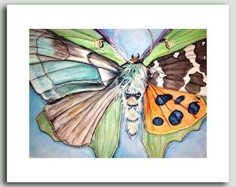 Morph - Multi-moth print
