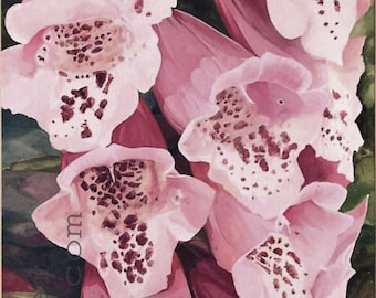 Watercolor Pink Foxglove Botanical Flower Original Nature Art Garden Painting