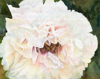 White Peony Floral Watercolor Original Garden Flower Painting Detailed Realism Nature
