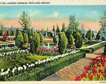 Vintage Oregon Postcard - Tulip Time at Lambert Gardens, Portland (Unused)