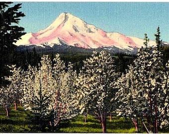 Vintage Oregon Postcard - Mount Hood from Hood River Valley (Unused)
