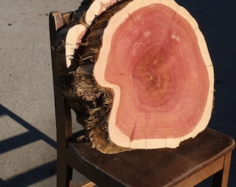 """Large Cedar Tree Slice, 12"""" to 18"""" wide, 2"""" thick, large wood pieces, DIY wood slices, project wood slab, round wood slab"""