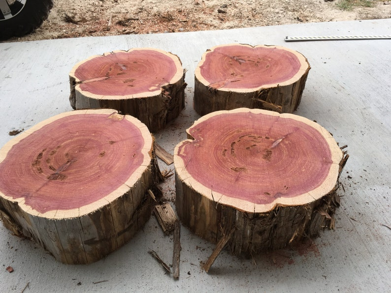 Large Tree Stump Aromatic Texas Red Cedar Cut To Order Etsy