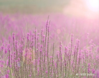 Photography - Fields Of Purple Wildflowers Photography Print  - Botanical - Summer  Blooms - Nature Photography - Photography Prints