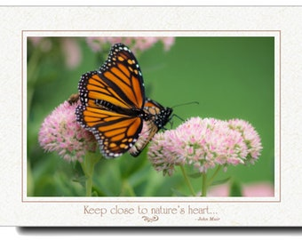 Photography - Butterfly Photography Card Or Print   -  Butterfly Photo - Monarch Butterfly Photo - Nature Mothers Day - Photography Prints