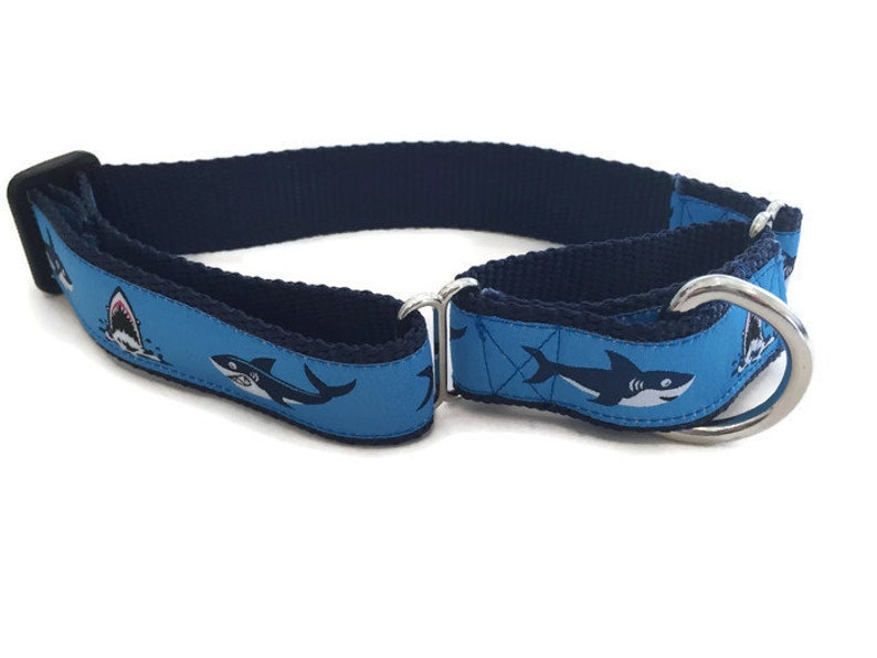 Shark Martingale Dog Collar 1 inch wide 11 to 14 inches image 0