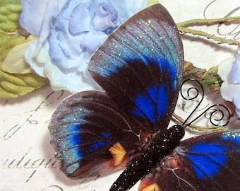 Butterfly Embellishments Serenade In Blue
