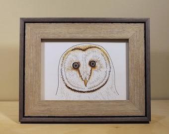 Barred Owl Original Drawing