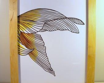 Framed Original Goldfish Tail Drawing