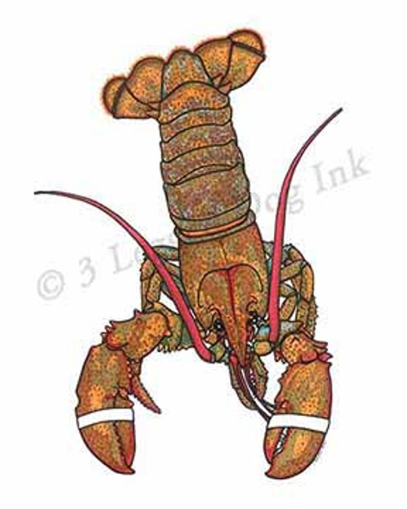Maine Lobster Print image 0